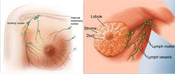 wp-image-2036295492 8 Major Signs & Symptoms of Breast Cancer